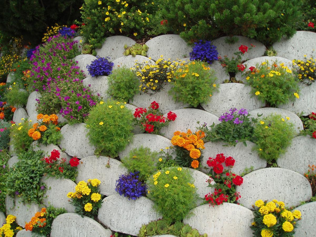 Клумба из цветов своими руками фото